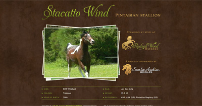 Stacatto Wind Website Screenshot