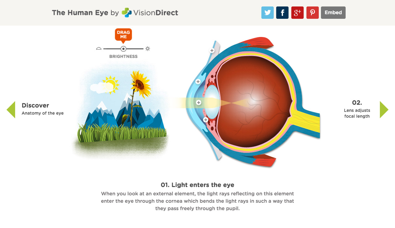 An Interactive Guide To The Human Eye Website Screenshot