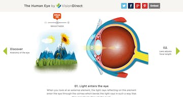 An Interactive Guide To The Human Eye Thumbnail Preview