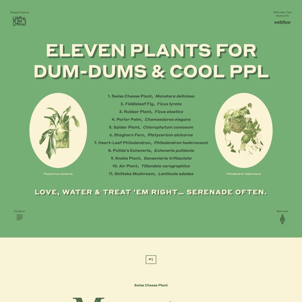 Eleven Plants for Dum-Dums & Cool Ppl Website Screenshot