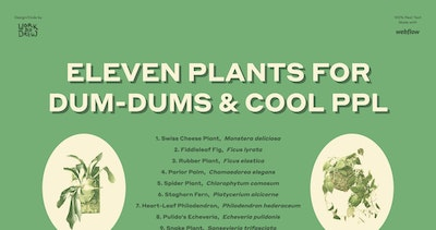 Eleven Plants for Dum-Dums & Cool Ppl Thumbnail Preview