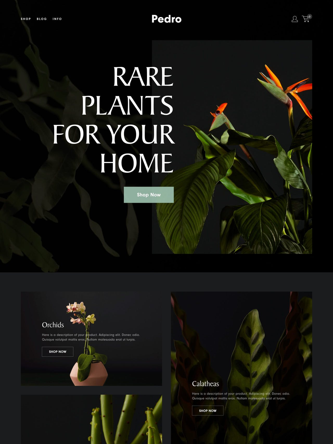 Squarespace Pedro Template - Home Page Screenshot